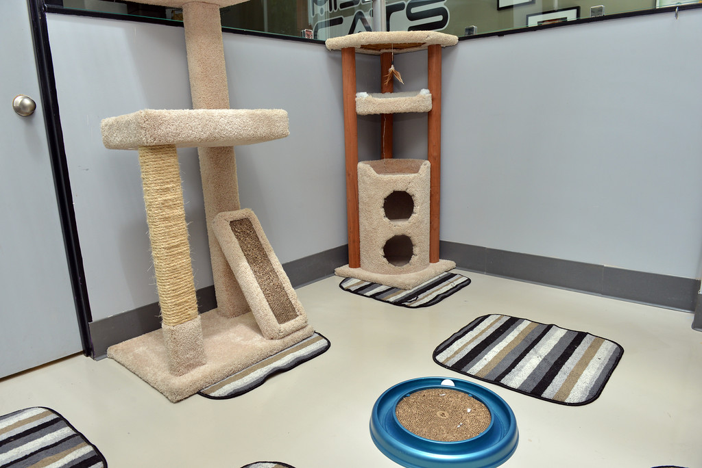 Mission: Cats Lounge Play Area