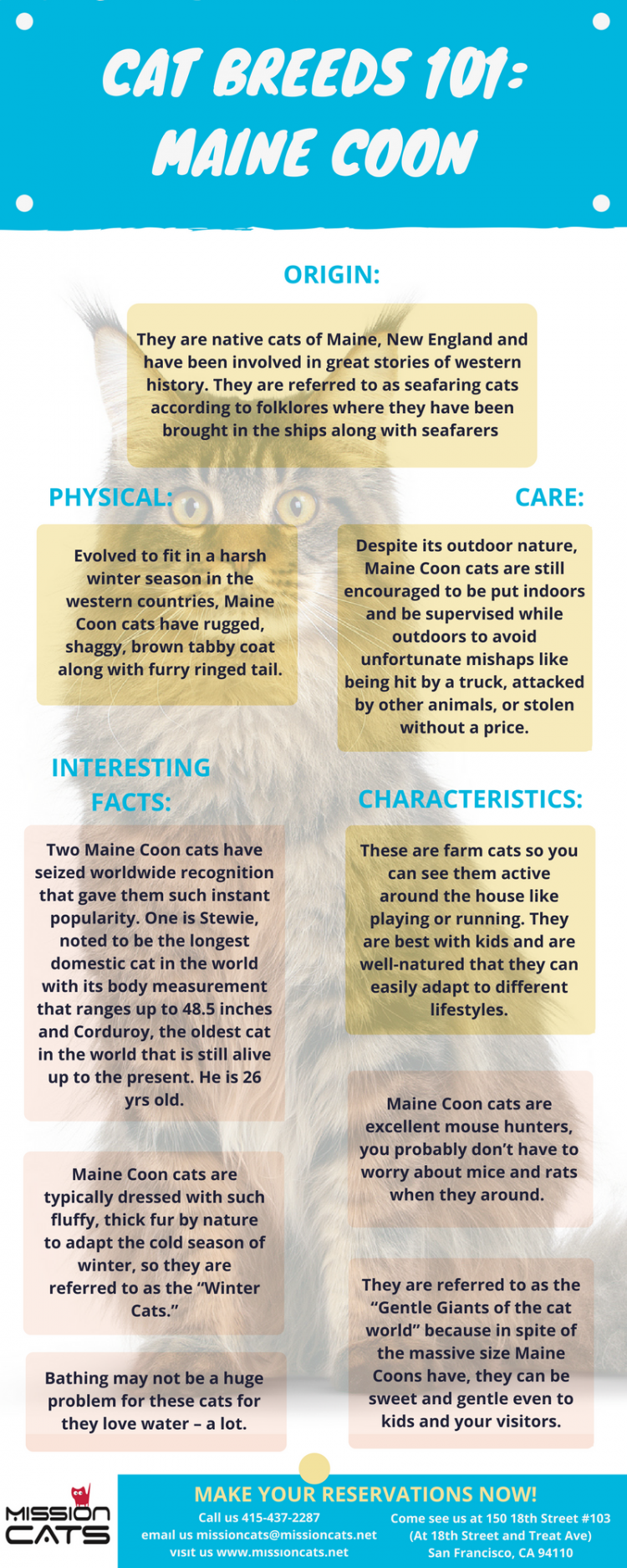 cat breeds 101 maine coon
