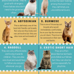 Kid's Friendly Cat Breeds