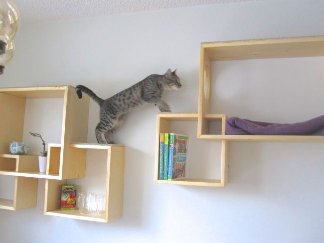 DIY kitty exercise tower using a bookshelf
