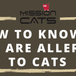 Things to know if you are allergic to cats