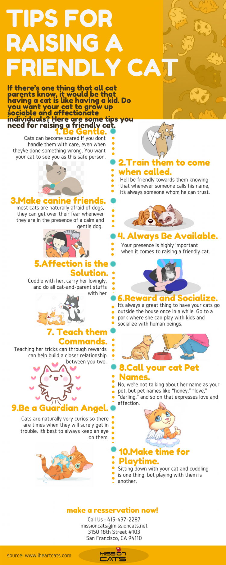 Tips for Raising a Friendly Cat