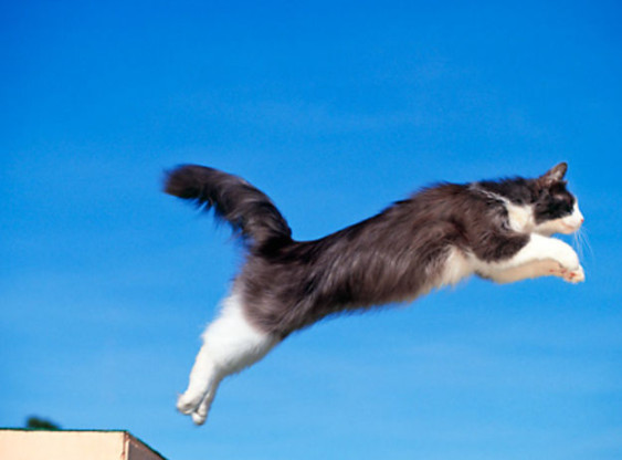 A cat can jump up to six times its length