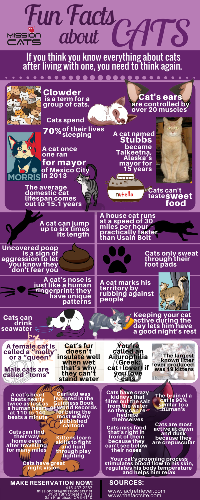 fun fact about cats