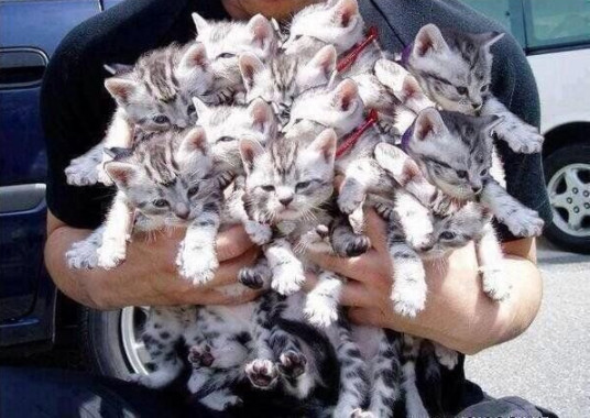litter produced 19-kittens