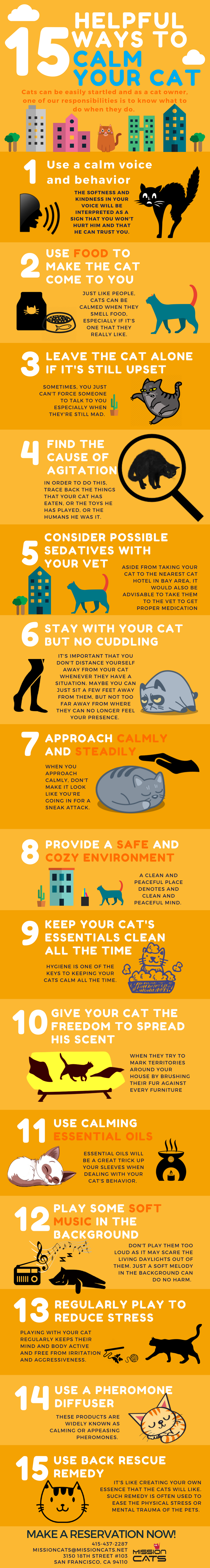 15 Helpful Ways to Calm Your Cat